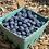 Thumbnail: Blueberries, Pint