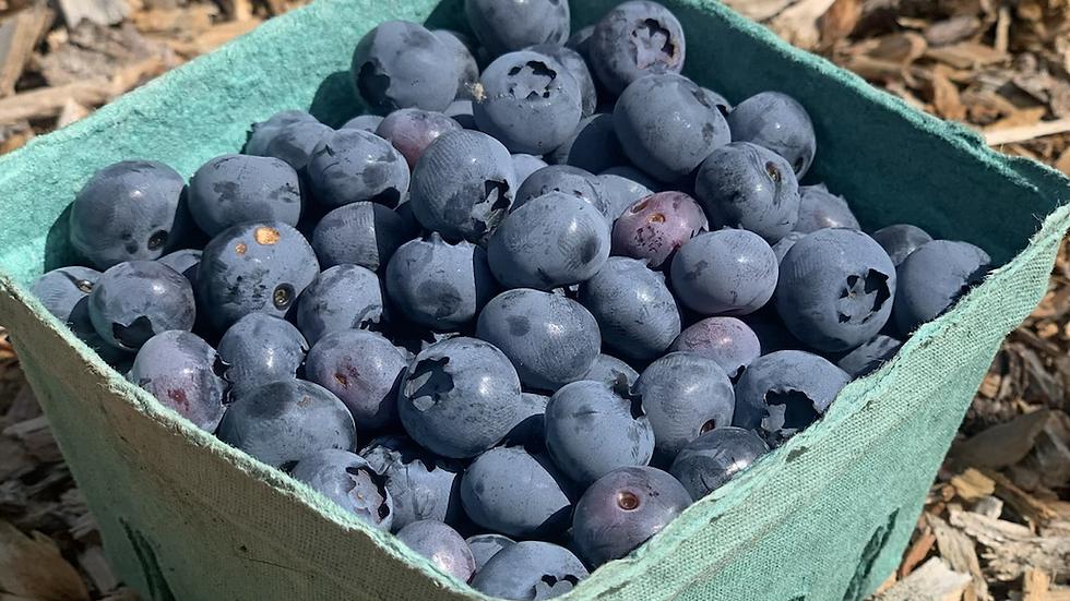 Blueberries, Pint