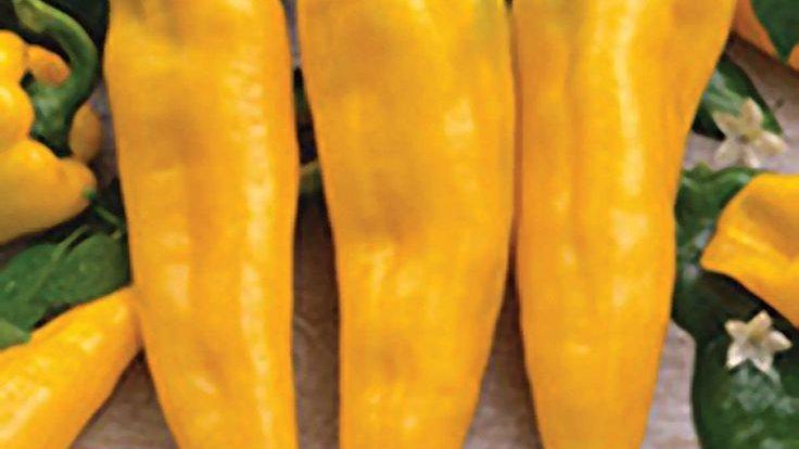 Pepper, Sweet Cornito Giallo, per 1 lb