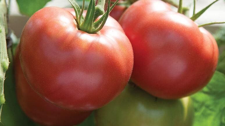 Tomato-Martha Washington, per lb.