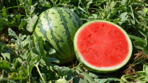 Watermelon, Small Red Seedless