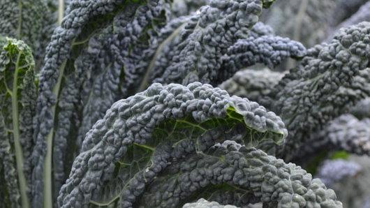 Kale, Black Magic, Bunch