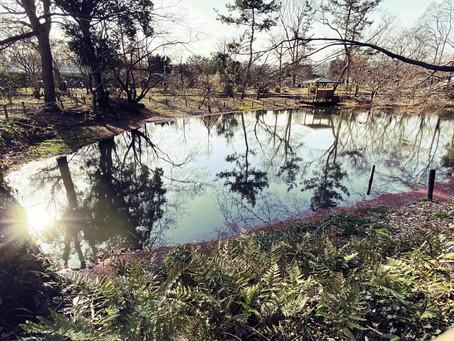 北山 京都府立植物園