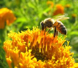 BeeFlower.jpg
