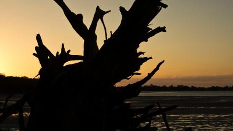 Tree Stump Sunset