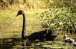 Hunter Wetlands Park 07072018-6.JPG