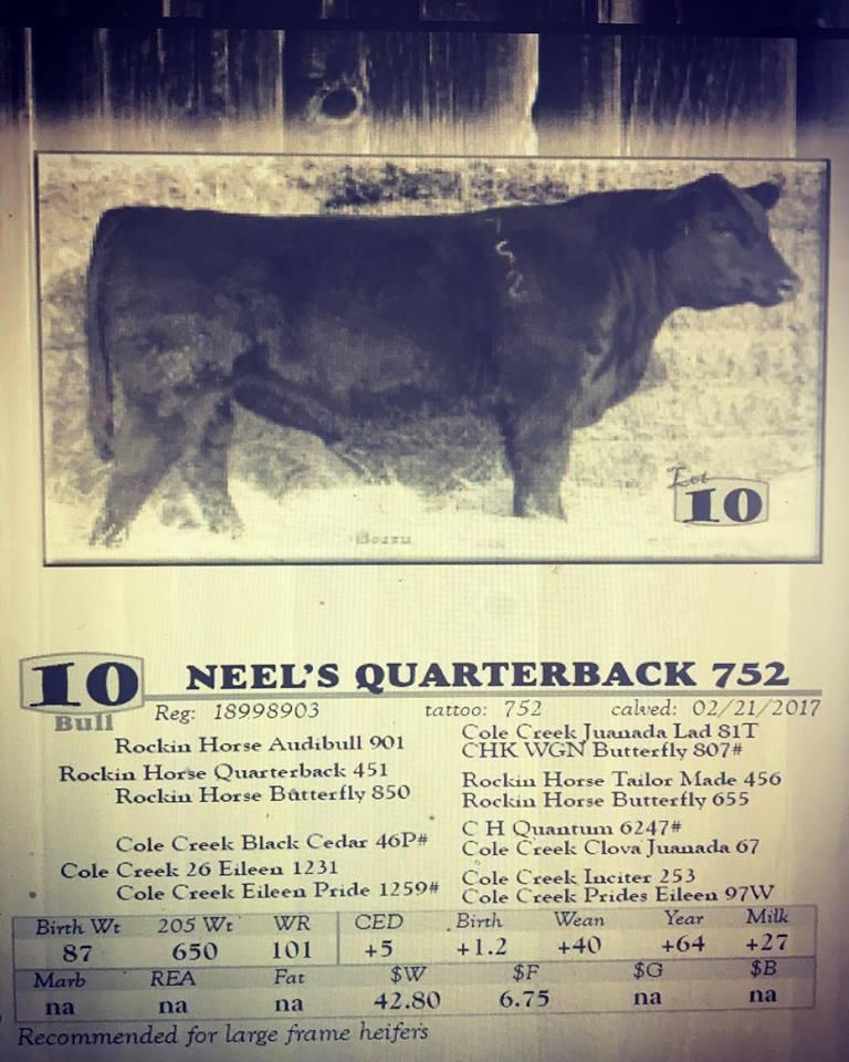 New herd bull genetics