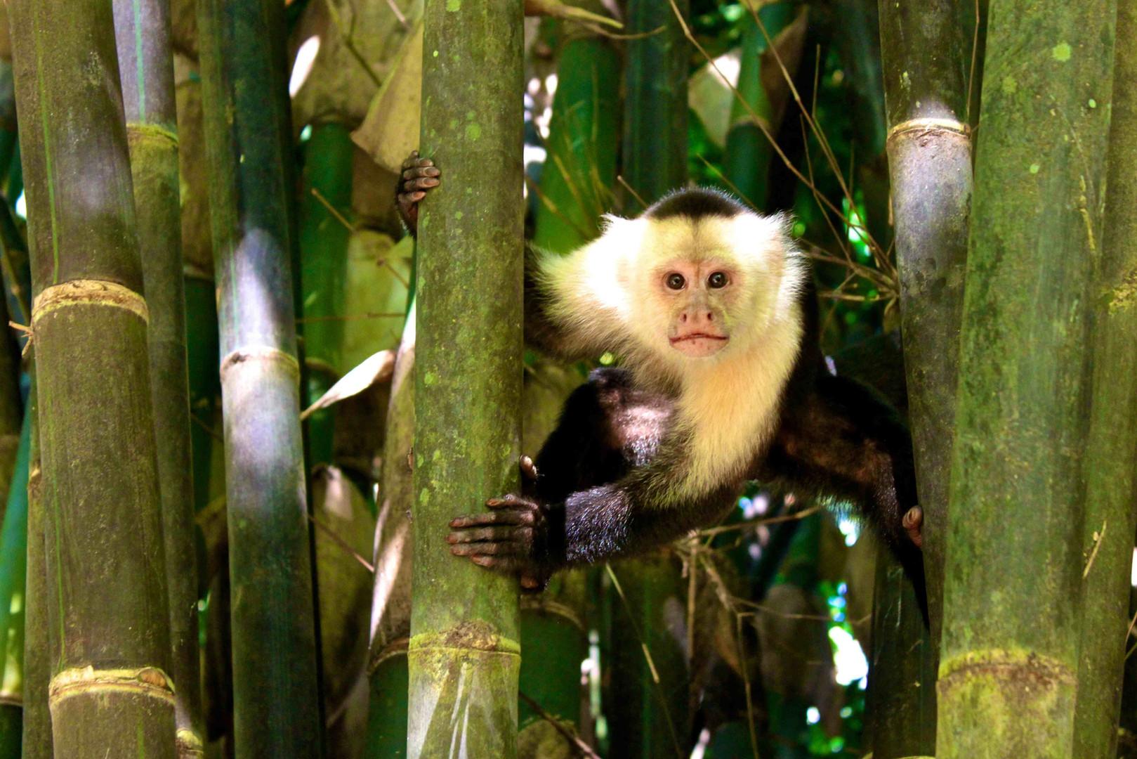 best+monkey.jpg