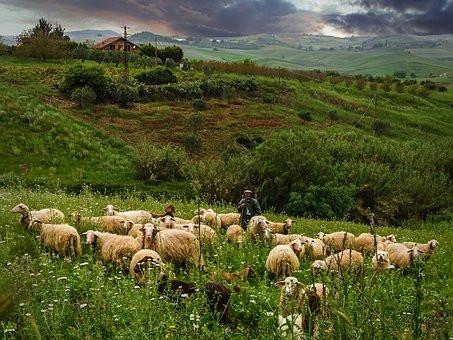 shepherd-5013441__340.jpg