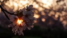 sunset-5301539__340.jpg