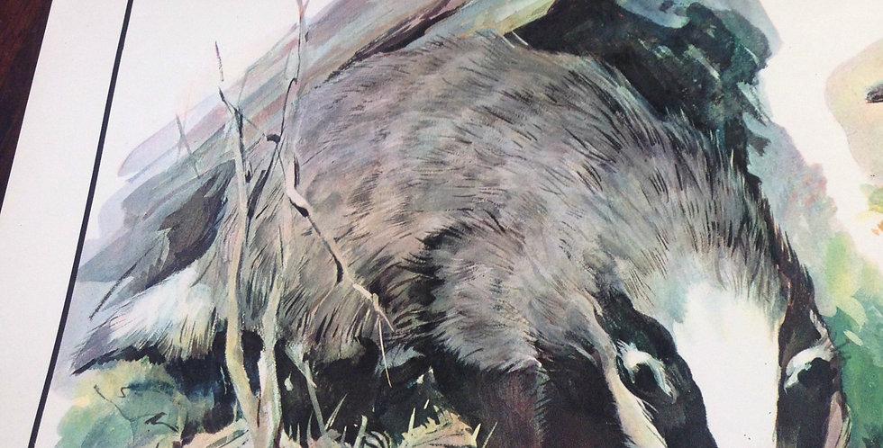 Flesh-eating Animals wall chart