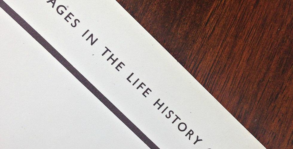 Beetle life history wallchart