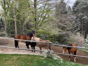 Pferde im Padock vor dem Stall