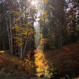 Herbst im Langschägerwald