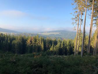 Wiegenwald Blick Richtung Nebelstein