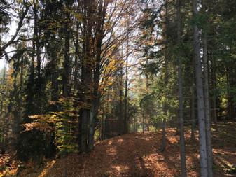 Herbstimmung ums Forsthaus