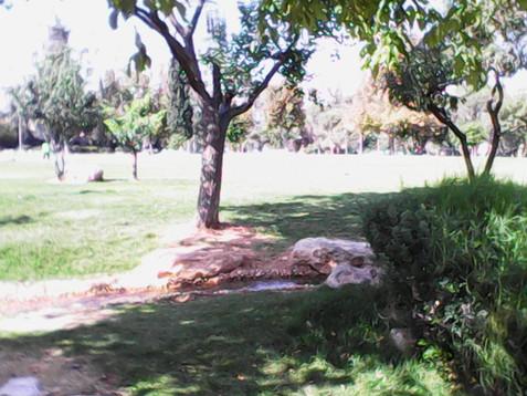 Sukkot 2014 middle 036