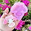 Thumbnail: My Melody Dango mold