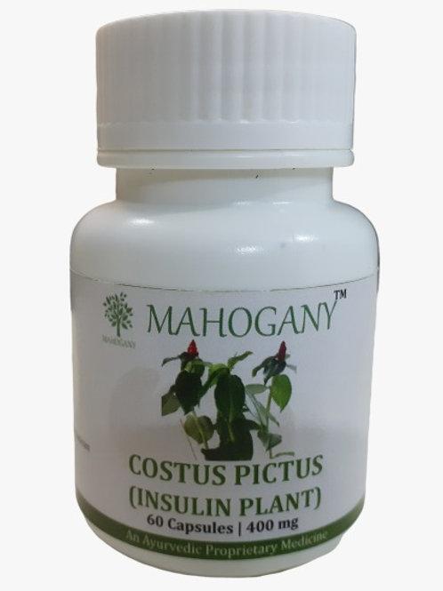 Mahogany Insulin Plant (Costus Pictus) Capsules