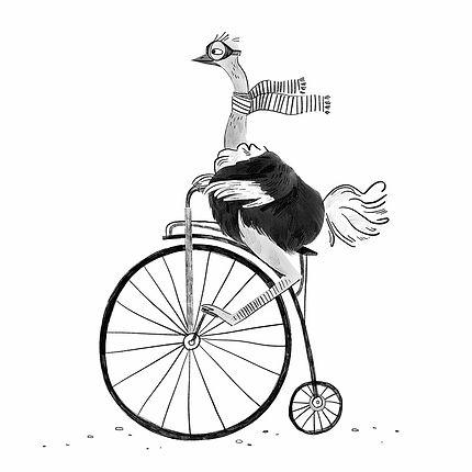 Ostrich Penny Farthing Illustration.jpg
