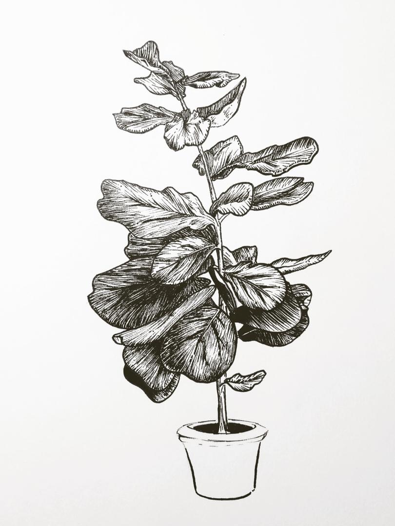 Indoor Plant Study