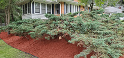 Red Mulch With Dig Free Edging