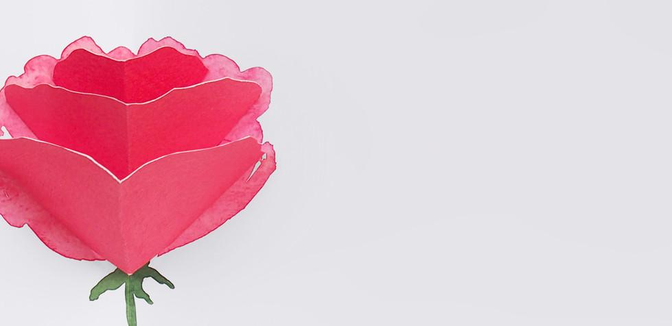 Exposició de roses pop up