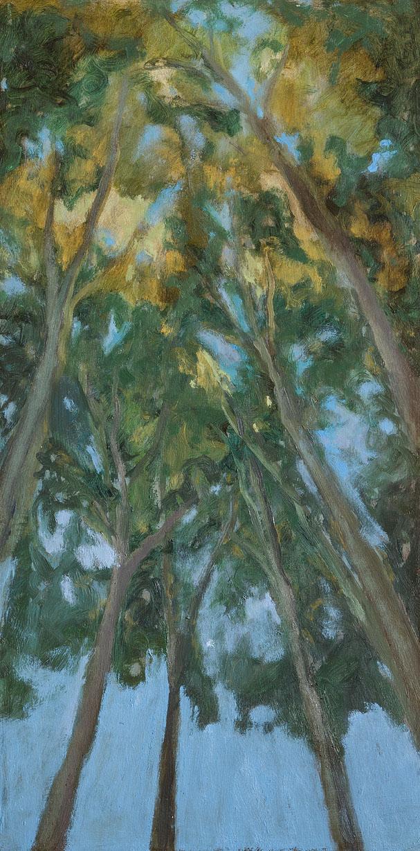 Llum al bosc