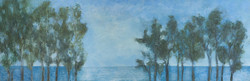 Eucaliptus i mar
