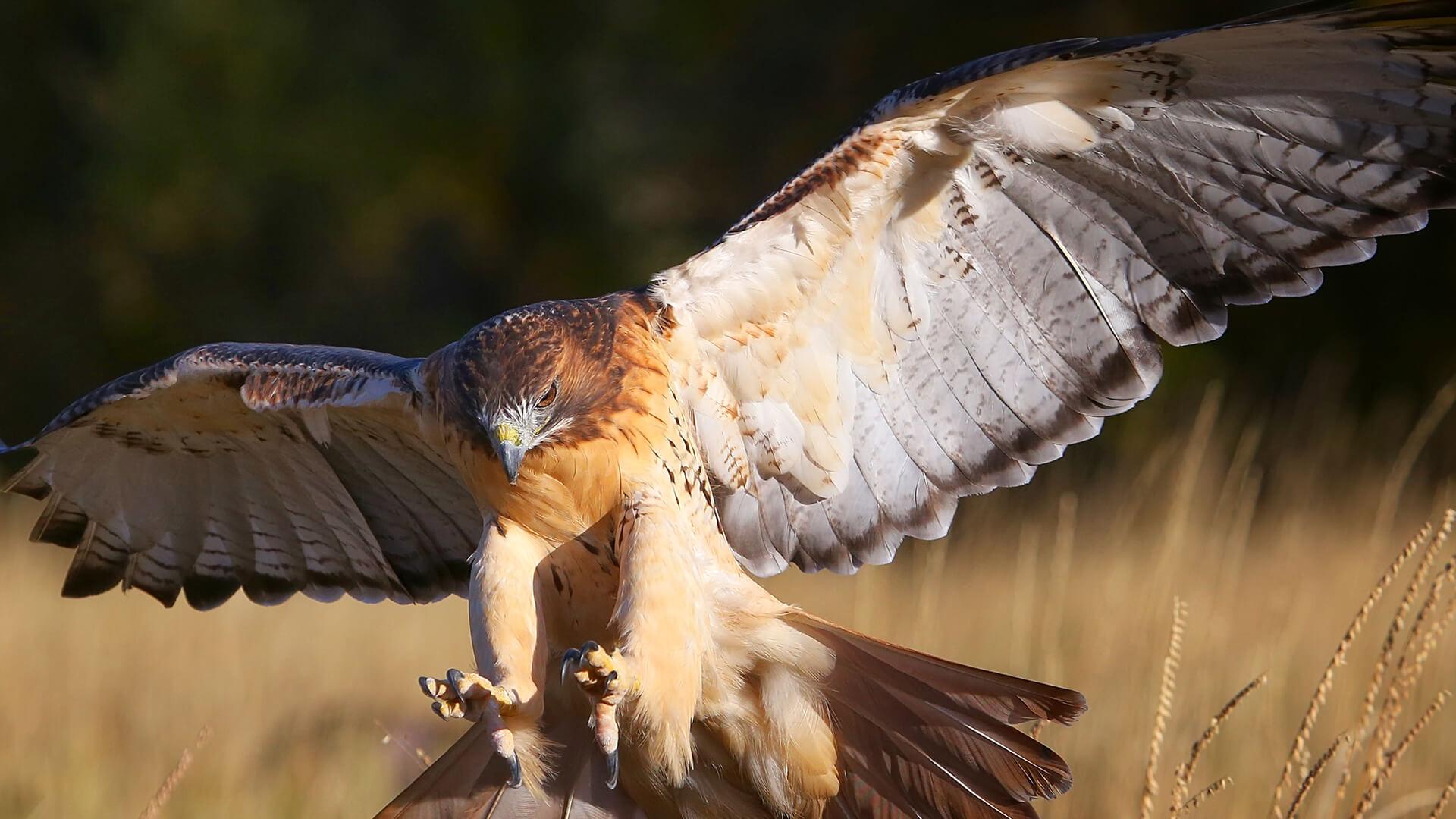 Mentoring: Hawk Session