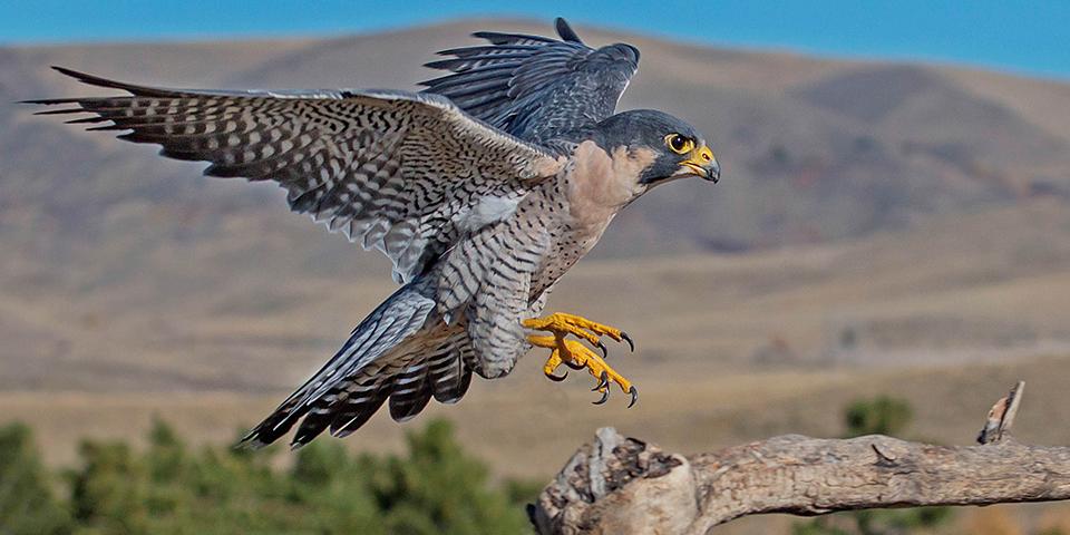 Mentoring: Falcon session