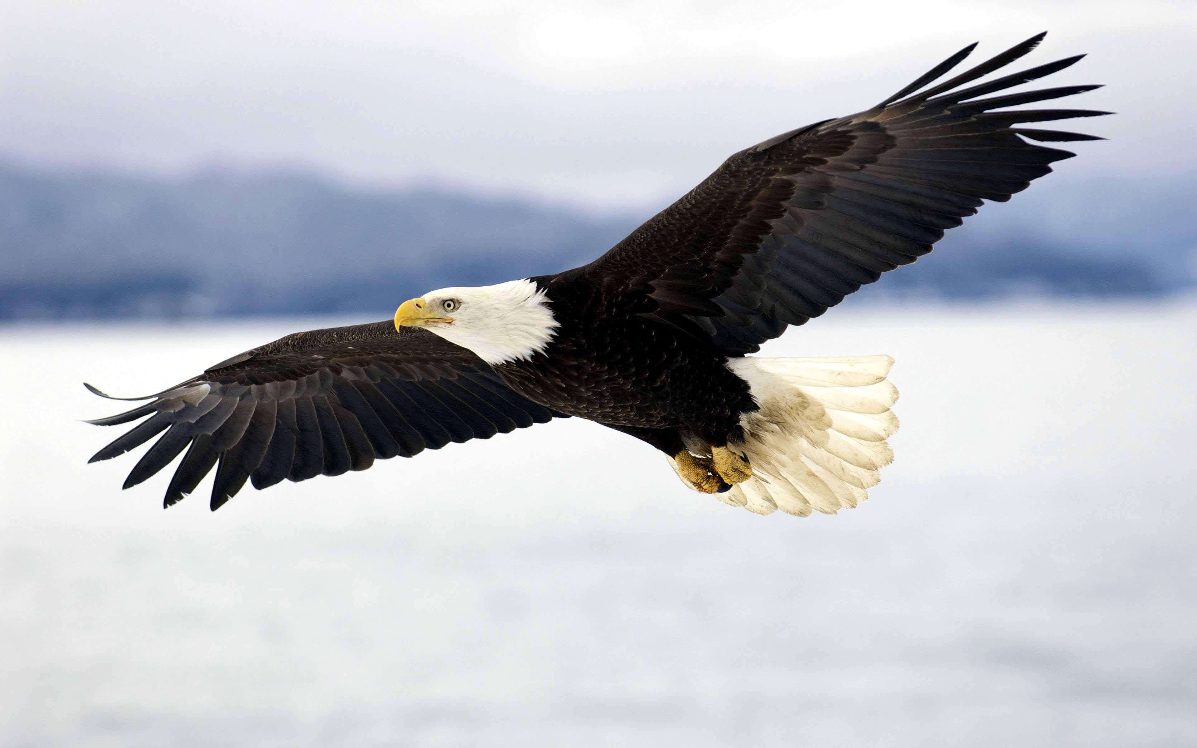 Mentoring: Eagle Session
