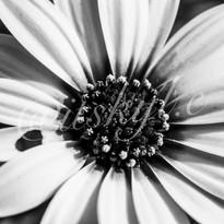 flower watermark.jpg