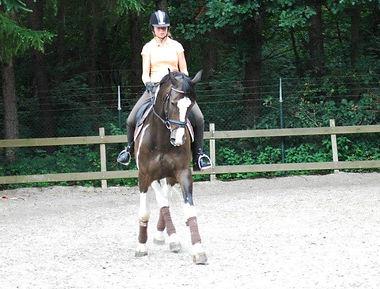 Z-dressuur paard Nashville appuyement