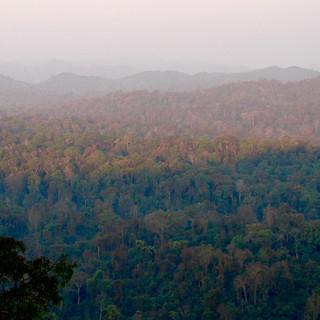 Forest Disturbance & Biodiversity