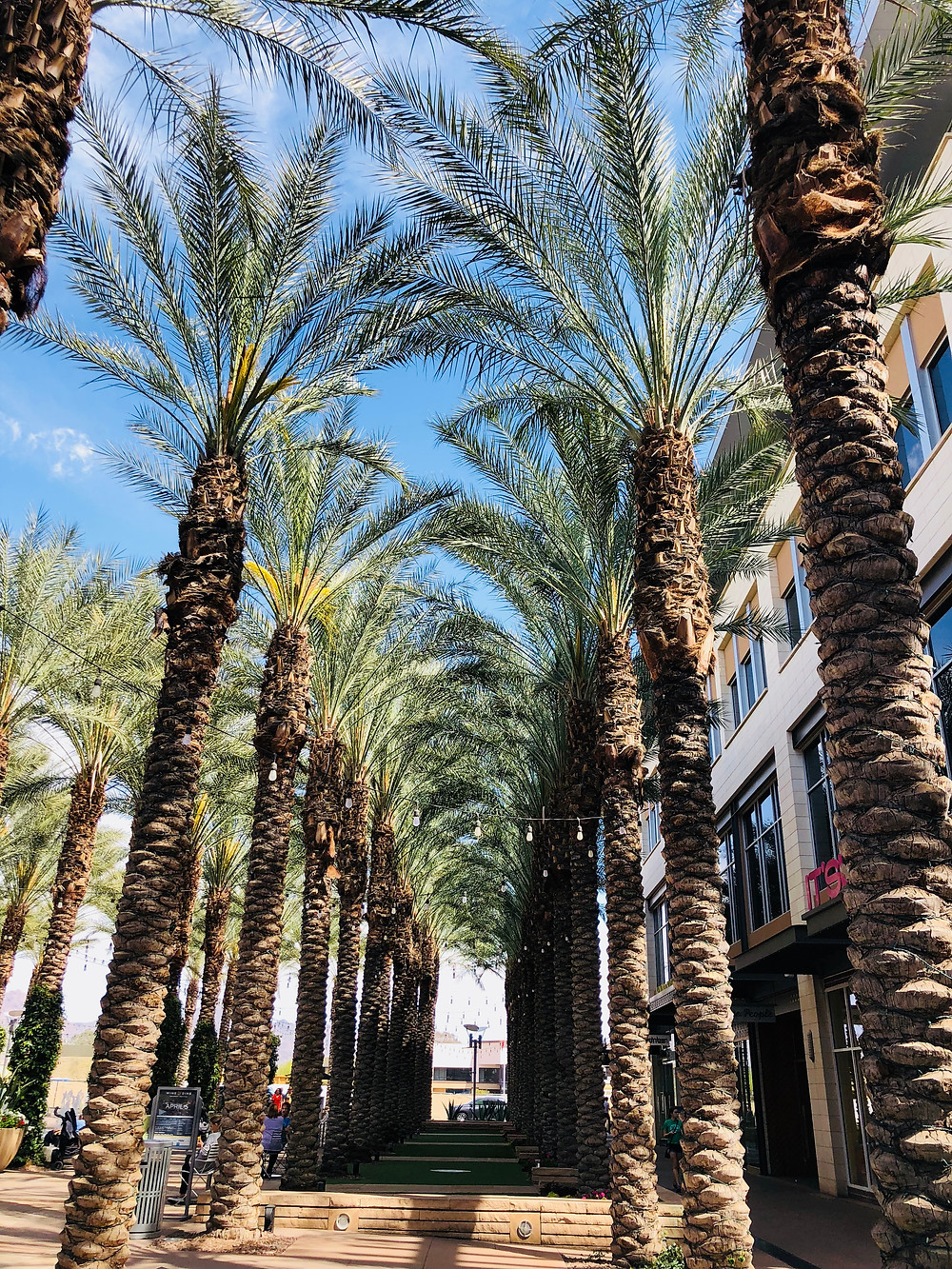 10 things to do in Scottsdale