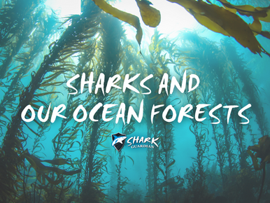 Sharks and Ocean Forests
