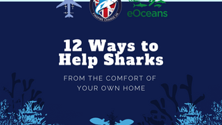 What can you do to support Shark Guardian and the oceans?