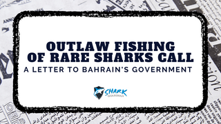 Shark Guardian supports the fight to protect sharks in Bahrain