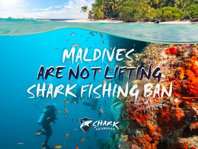 Maldives are NOT lifting shark fishing ban!