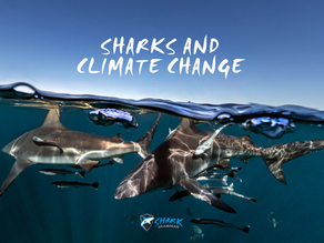 Sharks and the Climate Crisis