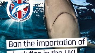 Finspire Change UK update: what's happened since the 100,000 signature milestone?
