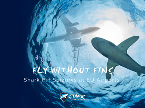 Shark Fin Seizures at Frankfurt and Brussels Airport