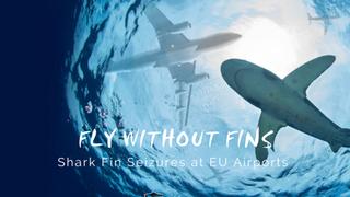 Shark Fin Seizures at Frankfurt and Brussels Airport