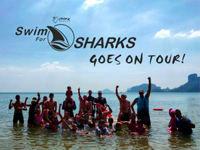 Shark Guardian's Swim for Sharks goes International