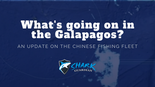 Chinese DWF in the Galapagos