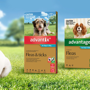 Advantage, Advantix & Advocate