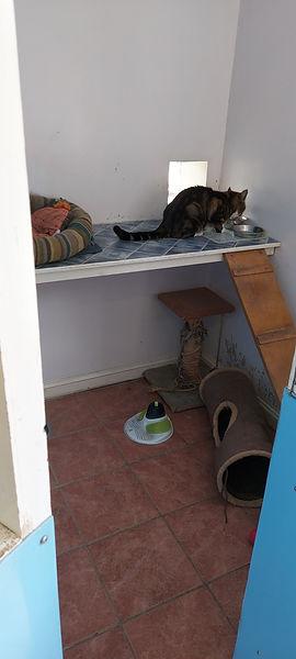 Cat unit