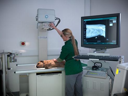 ultrasound scan.jpg