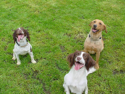 three dogs sitting in a field